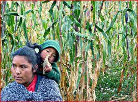 ¿Quiénes son las mujeres de maíz?