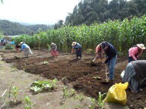 Siembra de hortalizas en las parcelas de los grupos de Chaquijyá, Sololá y Ciénaga Grande, Santa Lucía Utatlán.