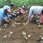 Establecimiento de hortalizas del grupo de Ciénaga Grande, Santa Lucía Utatlán.