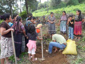Establecimiento de frutales en la parcela del grupo de San Isidro, Sololá