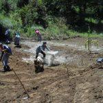 Incorparación  de ceniza en la parcela del grupo Bella Vista, Santa Lucía Utatlán.