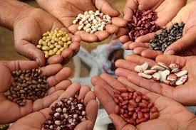 Promueven uso de semilla criolla